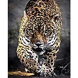 5D diy pintura diamante taladro completo kit de punto de cruz,leopardo para Hogar Decoración Pintado-16x12inch/sin marco