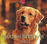 Golden Retriever: Original Stürtz-Kalender 2020 - Mittelformat-Kalender 33 x 31 cm