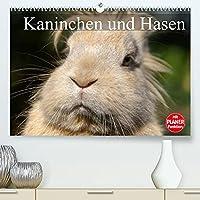 Kaninchen und Hasen (Premium, hochwertiger DIN A2 Wandkalender 2022, Kunstdruck in Hochglanz): Niedliche Gesellen im flauschigen Fell (Geburtstagskalender, 14 Seiten )