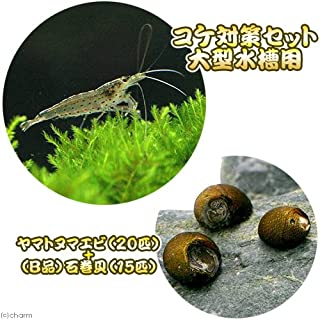 charm(チャーム) (エビ・貝)コケ対策セット 大型水槽用 ヤマトヌマエビ(20匹) +(B品)石巻貝(15匹) 【生体】