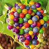 Egrow 50 Pz/Pacco Semi D'uva Arcobaleno Variopinto Piante da Frutto da Giardino Semi di UVA Dolce Kyoho