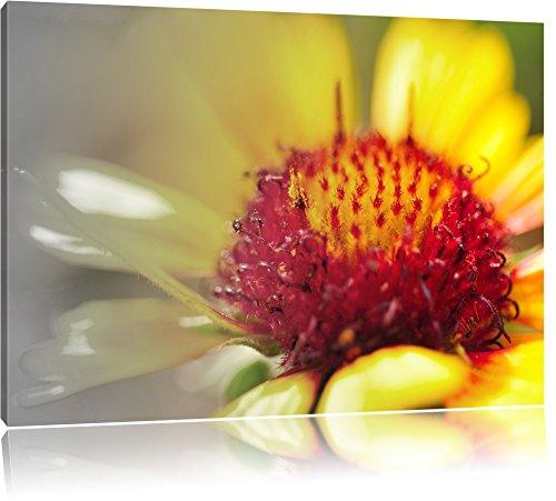gloeiende gele arnica bloemFoto Canvas | Maat: 100x70 cm | Wanddecoraties | Kunstdruk | Volledig gemonteerd