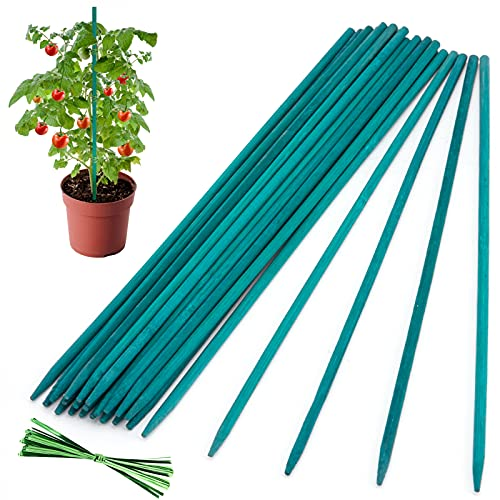 25PCS Plant Stakes, 12in Wooden Garden Stakes Green Bamboo Sticks Plant Support, Sturdy Floral Wood Plant Stakes, Flower Orchid Tomato Plant Supports for Outdoor Plants Stakes for Gardening