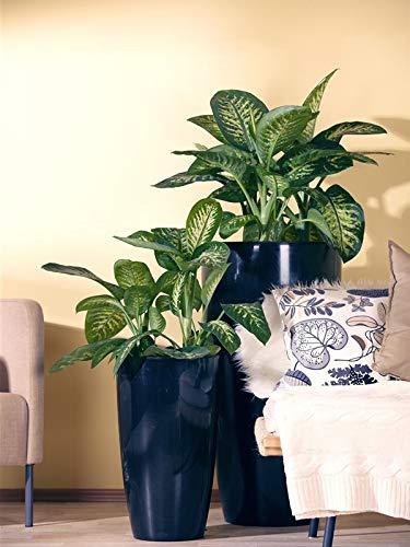 zimmerpflanzen badezimmer