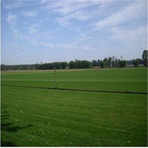 graines de pelouse, pas de taille, vert semences de gazon - 500 pcs / lot
