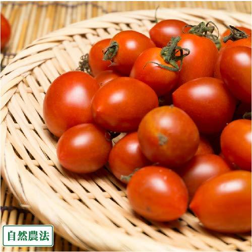 ミニトマト 1.5kg 自然農法 (沖縄県 大宜味農場) 産地直送 ふるさと21