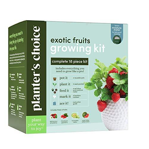 Exotic Fruits Growing Kit - Complete Kit - Grow 4 Indoor Fruit from Seeds (Strawberries, Goji Berries, Honeydew, Watermelon) & Guide - Unique Gardening Gifts for Women & Men : Plant Starter Kit