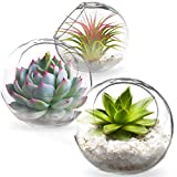SunGrow Glass Plant Terrarium Globes, 2.4-inches Opening, Pack of 3