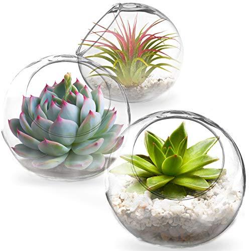 SunGrow Tabletop Containers, Creates Mini Glass Terrarium Garden,...