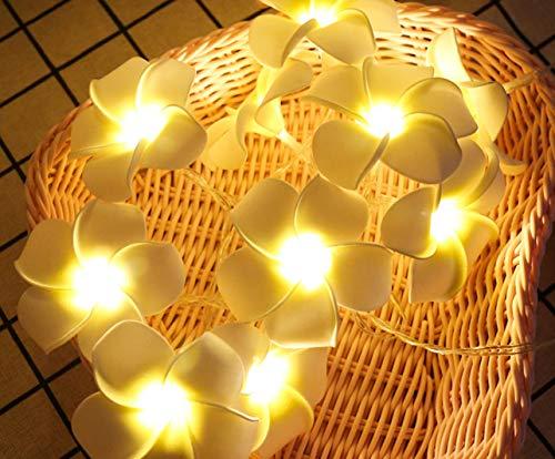 Frangipani Laterne Zeichenfolge führte Urlaub Dekoration Raumaufteilung kleine frische Mädchen Herz Dekoration Lampe 3 Meter 20 Lichter