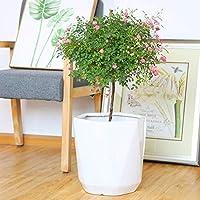 GYCヘキサゴンセラミック特大フラワーポット北欧の屋内リビングルームの装飾ジューシーな植物ポットシンプルな白いパティオ中庭の花瓶オフィスレストランの装飾屋外ガーデンプランター(サイズ:L)