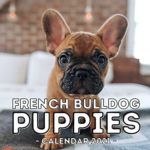 French Bulldog Puppies Calendar 2021: 16-Month Calendar, Cute Gift Idea For Frenchie Lovers Men & Women
