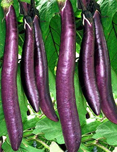 mymotto 30PCS Giardino Adorabile Vegetable Plant Purple Lunghe Semi di melanzane