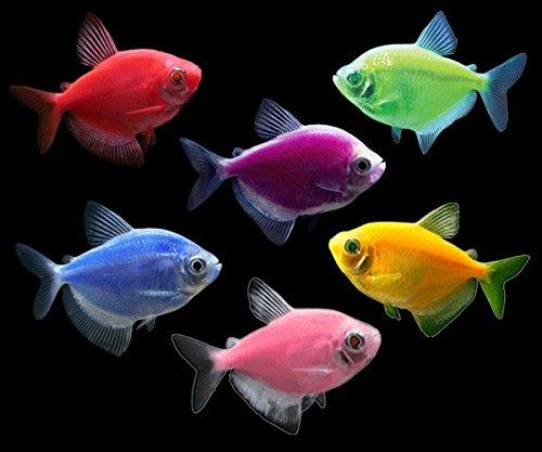 neon fish - 2