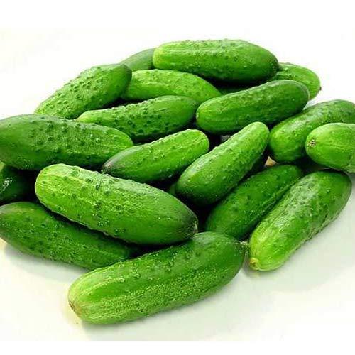 National Pickling Cucumber Seeds
