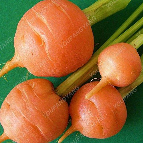 200pcs pourpre graines de carotte arc-en-Anti-âge ginseng bonsaï plantes en bonne santé sucre biologique semences potagères pour jardin Rose