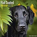 flat coated retriever calendar