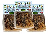 Clark&Co Organic 4500 Live Ladybugs - Good Bugs - (3 X 1500 Live Ladybugs) - Guaranteed Live Delivery!