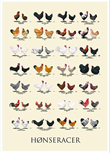 bribase Shop Farm Animals,Chicken,Chicken Breeds Poster 20 in x 13 in