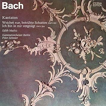 """Bach: """"Weichet nur, betrübte Schatten"""", BWV 202 - """"Ich bin in mir vergnügt"""", BWV 204"""