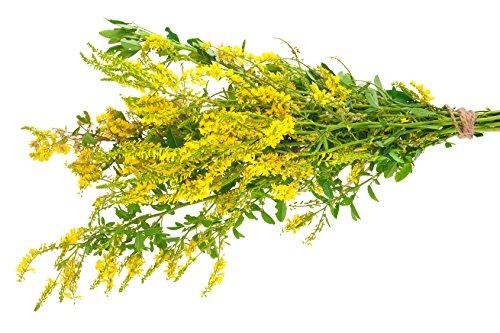 Echter Steinklee Melilotus officinalis 300 Samen