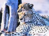 Diamante bordado leopardo 5D DIY Animal imagen artista de diamantes de imitación decoración del hogar pintura de diamantes A5 45x60cm