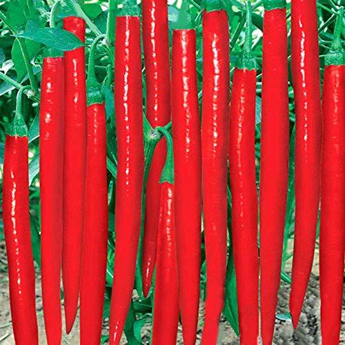 Shopvise Gaint long Piment rouge Graines de légumes pour la santé jardin 200Pcs / Sac