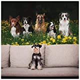 azutura Hunde Fototapete Haustiere und Tier Tapete Natur Schlafzimmer Wohnkultur Erhältlich in 8 Größen Riesig Digital
