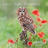 Eulen Owls 2020 - Broschürenkalender - Wandkalender - mit herausnehmbarem Poster - Format 30 x 30 cm