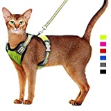 Top 10 Cat Harness