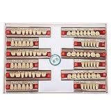 Diente de resina sintética, resina sintética dental Dientes postizos Material dental Dientes Dentadura Suministros de dentista