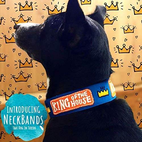 That Dog In TuxedoKing of House Dog Neck Band Collar An Alternative Accessory for Bandana (Blue, m-L)