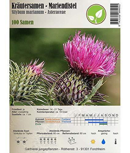 Semi di erbe - Cardo mariano / Silybum marianum - Asteraceae 100 Semi