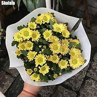 6:farmerlyでは6を成長させるための150pcs /バッグレア花アウトドアブルーミングハーディ盆栽鉢植えのネイチャーシード簡単
