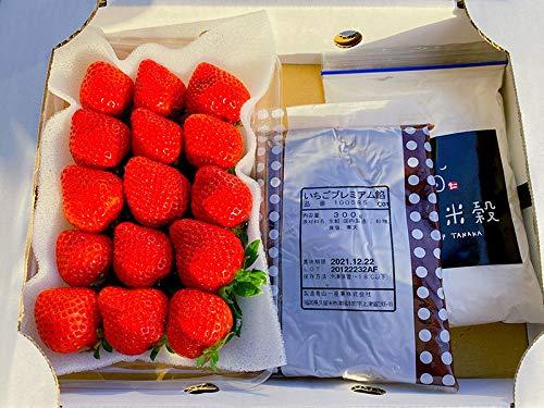 低農薬 福岡 あまおう いちご 大福 キット 苺 イチゴ 手作り 体験 セット 産地直送 NN