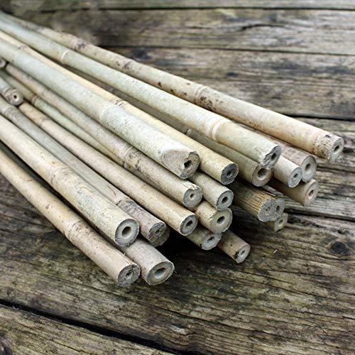25 Bambusstäbe - Bambusstangen ca. 182 cm lang/ 12-14 mm dick