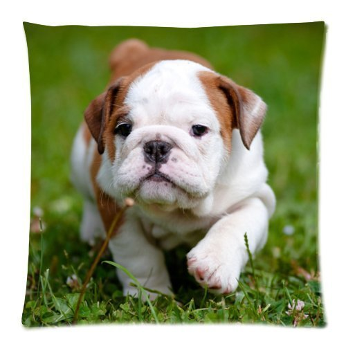 Bulldog Puppy Cushion Case - Throw Pillow Case Decor Cushion Covers Square with Invisible Zipper Closure - 18x18 inches, Twin-sided Print