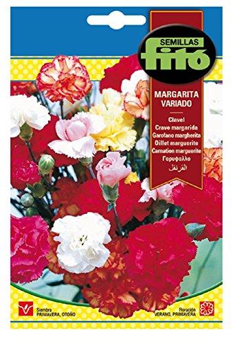 Semillas Fitó 543 - Semillas de Clavel Margarita Variado