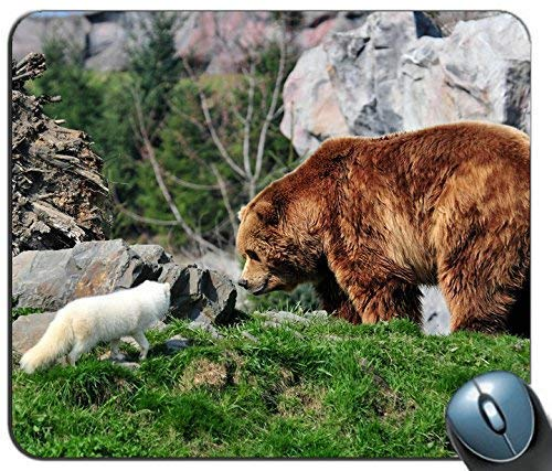 Mauspad Bär Grizzlybär Arctic Fox Grass Rocks Mousepad Personalisiertes Rutschfestes Spiel Rechteck Gummi Gedruckt Komfortable Mausmatte Angepasster Computer 25X30Cm