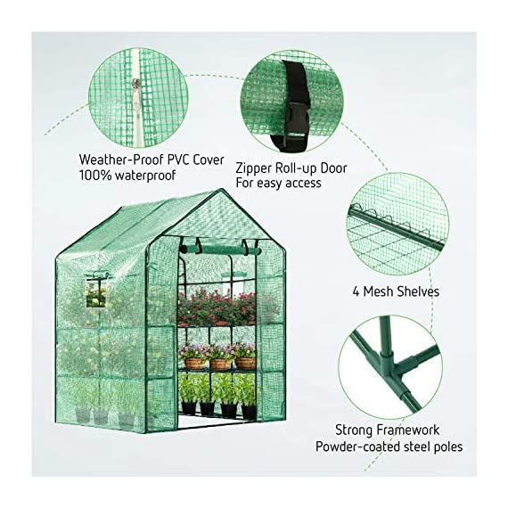 Vivosun 57x57x77-inch mini walk in green house with window and anchor plant garden hot house 2 tiers 8 shelves 6 multi-shelves, large space- crafted with 8 wired shelves, overall dimension:57x57x77-inch, our vivosun green house is large enough for starting seed, sprouting young plants, blooming flowers and cultivating fresh vegetables; 3 tiers and different height between each shelf provide a possibility to grow both small and large plants side by side roll-up entrance & windows- zippered roll-up entrance at the front provides an easily access to the greenhouse and a bigger operating space; 2 side windows bring a better air circulation of the green house, even if in hot weather, your lovely plants can breath fresh air; and the custom meshes on the window effectively isolate the pests from harming plants high-quality & long life time pe cover- our vivosun greenhouse is double-stranded edge banding, making the cover more tough and more durable; thanks to the anti-cold agent added in the cover, its lifetime is 3 months more than usual cover; in addition, our high-quality pe cover can prevent the harm from uv and bad weather but offering the best solar performance, which will nourish your plants very well