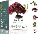 Cultivea Mini - 5 Bonsai Ready-to-Grow Kit - Semi di qualità - Giardino e decorazione - Idea regalo (Mela rossa, Cercis cinese, Cornus Kousa, Albizia, Abete rosso) (Bonsai)