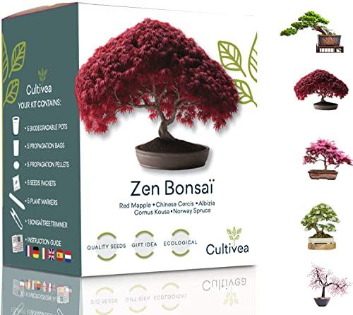 Cultivea Mini - 5 Bonsai Ready-to-Grow Kit - Französisches Saatgut - Gärtnern und dekorieren - Geschenkidee (Roter Mapple, Chinese Cercis, Juniperus, Liquidambar, Rotfichte)