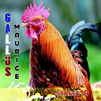 Gallus Maurice