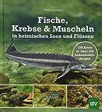 Fische, Krebse & Muscheln in heimischen Seen und Flüssen: 120 Arten in über 350 Lebendabbildungen