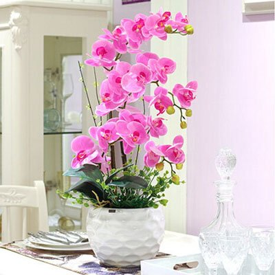 Fleur exotique Orchidée Graines Cattleya Multicolor Papillon Orchidee Bonsai Monoflord Mini jardin plante facile à cultiver 200 pcs/sac 21