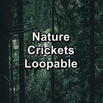 Nature Crickets Loopable