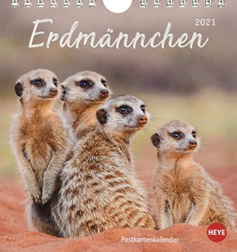 Erdmännchen Postkartenkalender 2021 - Kalender mit perforierten Postkarten - zum Aufstellen und Aufhängen - mit Monatskalendarium - Format 16 x 17 cm