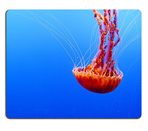 MSD Natural Rubber Gaming Mousepad IMAGE ID 36484570 orange nettle jellyfish from baltimore aquarium