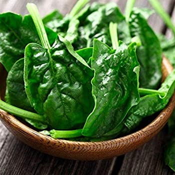 Gaea's Blessing Seeds - Spinach 300 Seeds Non-GMO Open Pollinated Avon 91% Germination Rate Winter Hardy Net Wt. 5.0g