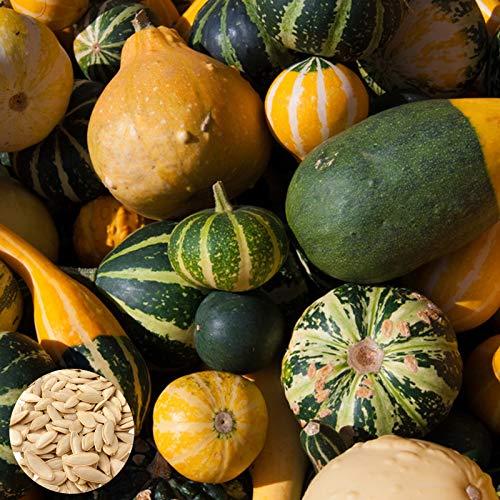 Semillas de Flores-30Pcs / Bolsa Semillas de hortalizas Plantas de semillero de calabaza de rayas de mezcla ornamental comestible prolífica para jardín - Semillas de calabaza